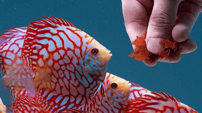 بررسی بهترین غذای ماهیهای گرمسیری