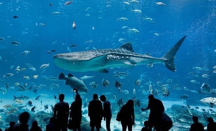 10 گونه از بهترین ماهی آکواریوم