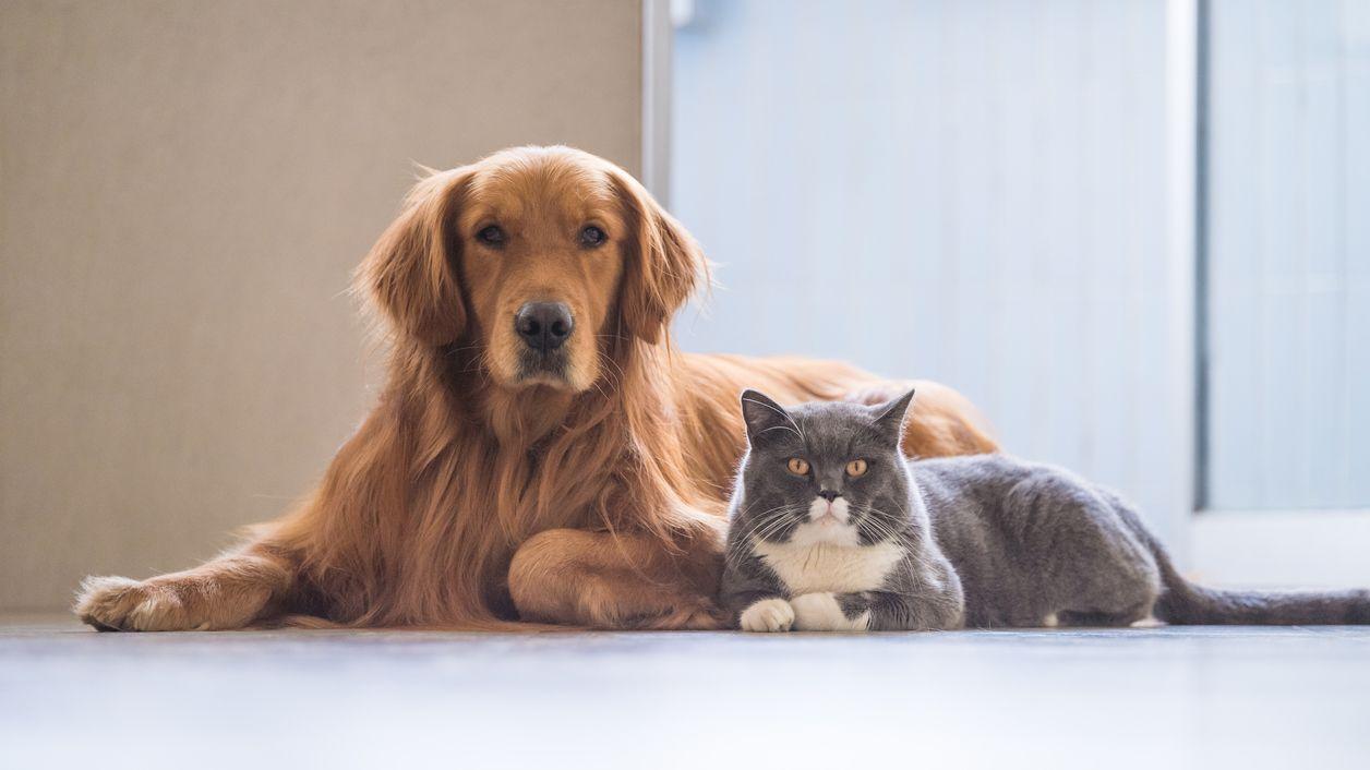 چگونه از گربه و سگ در کنار هم نگهداری کنیم؟