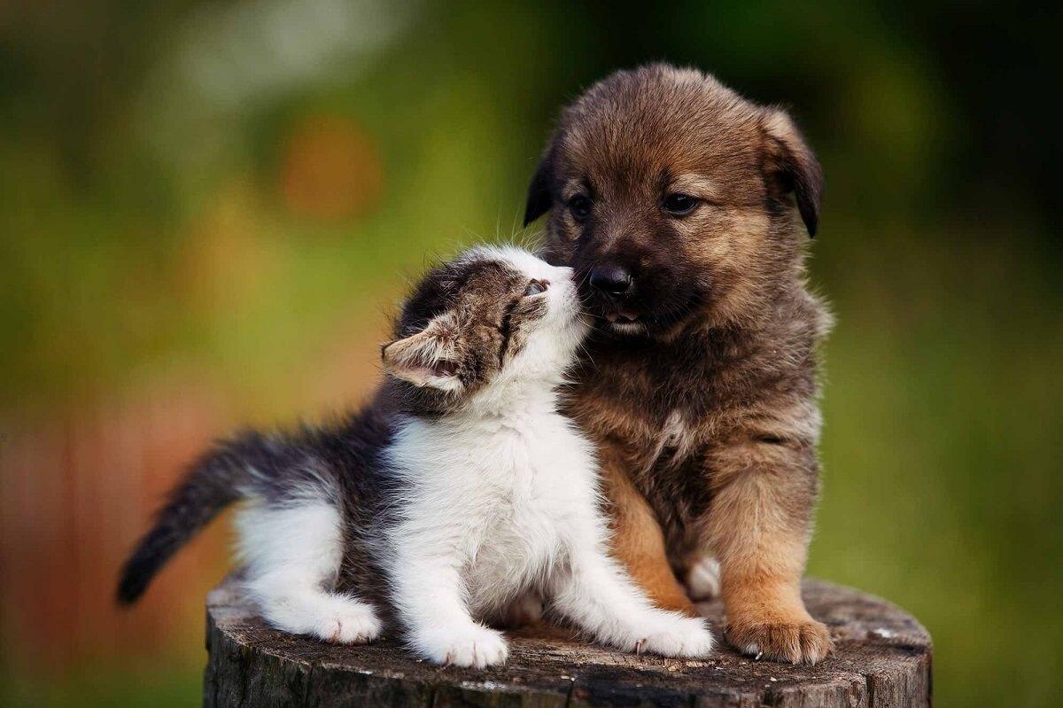 نگهداری از دو گربه یا دو سگ همجنس