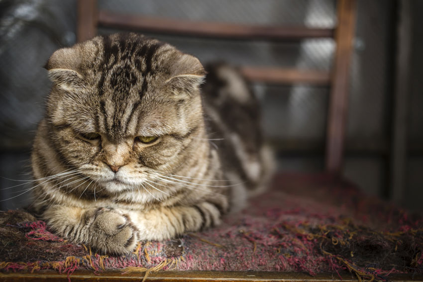 استرس در گربهها