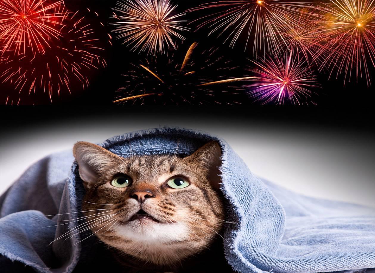 گربه و آتشبازی