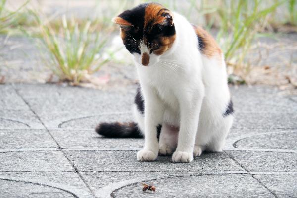 اگر گربه توسط زنبور گزیده شود چه باید کرد؟