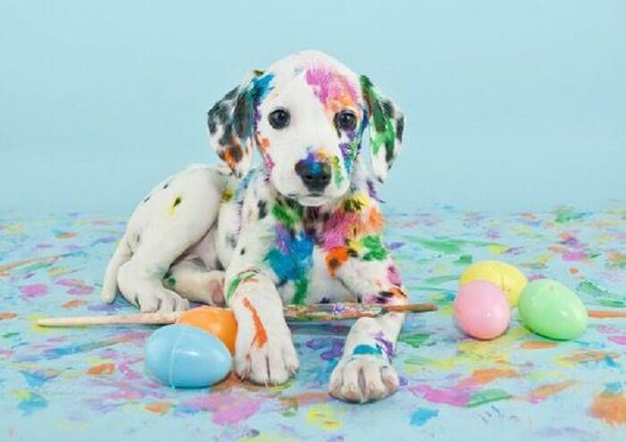 دید سگ نسبت به رنگها چگونه است؟