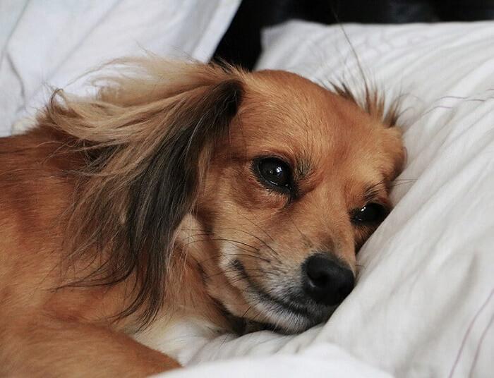 چگونه اسهال را در سگها درمان کنیم؟
