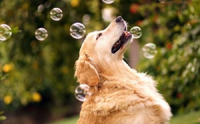 چند خصوصیت جالب سگها