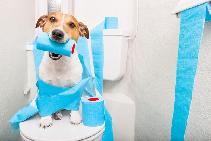 چگونه به توله سگ دستشویی کردن را آموزش بدهم؟