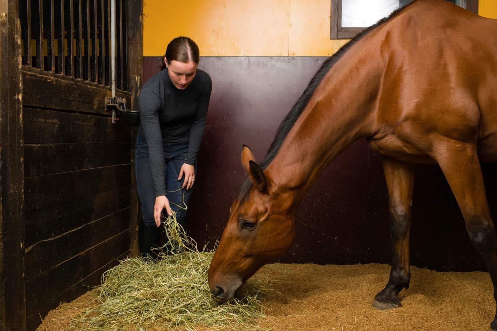 تغذیه مناسب برای اسب