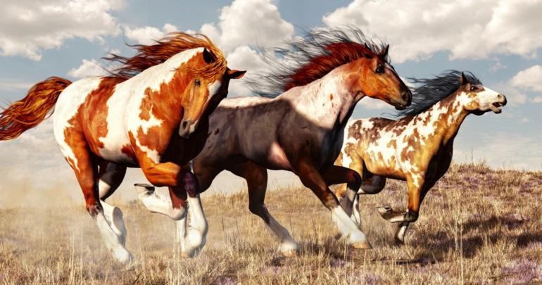محبوب ترین نژاد اسب ها در جهان
