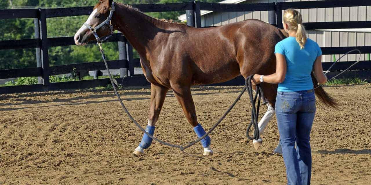 در مورد نحوه تربیت و آموزش اسب بیشتر بدانید